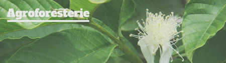 miniature bouton Agroforesterie