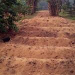 Cap-Sud-Emergences_Curcuma_Billons prêts pour le semis (2)
