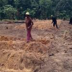 Construction des billons